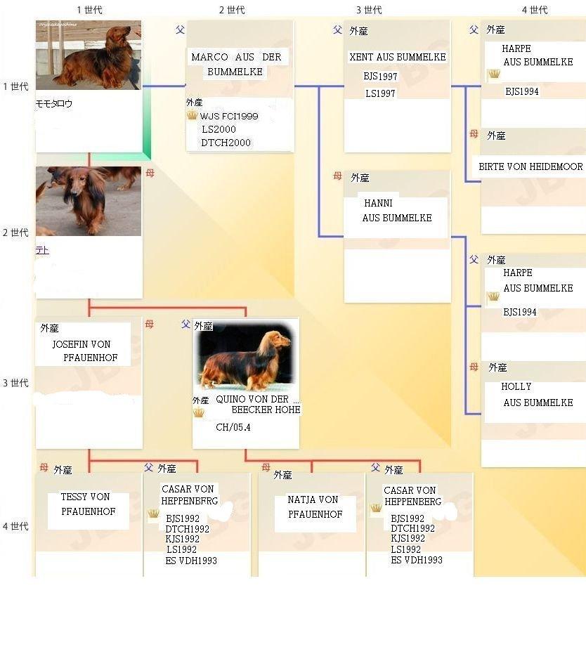 モモタロウの家系図
