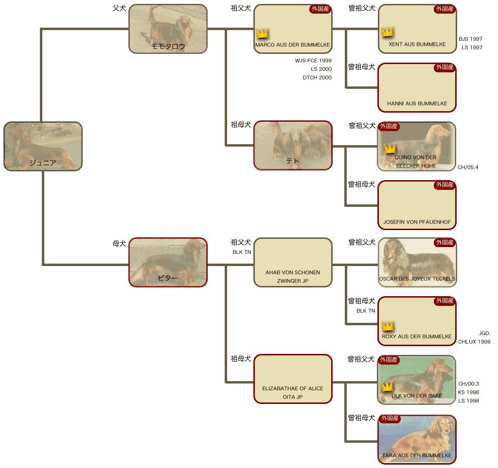 ジュニアの系統図