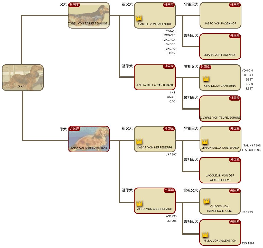 メイの系統図