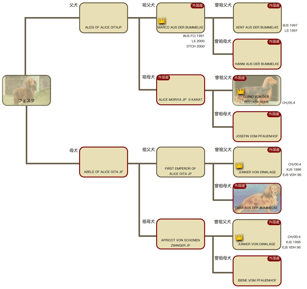 フェスタの系統図