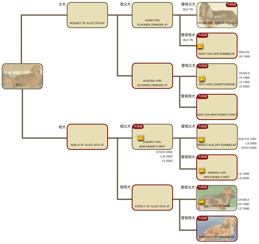 サニーの系統図