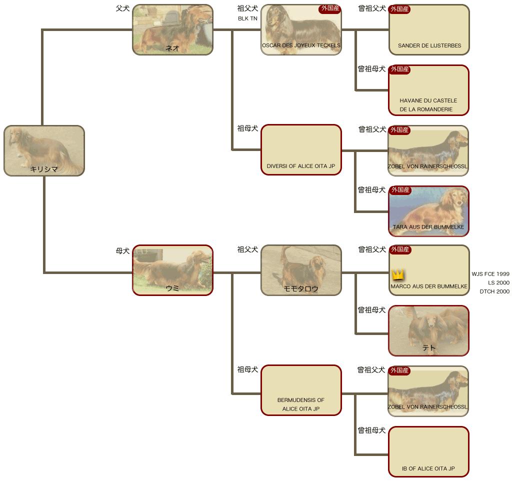 キリシマの系統図